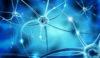 3d illustration of nervous network and nerve cells in blue background